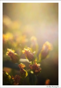 Spring flowers in afternoon light