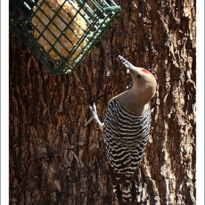 A Walk With Birds, Food & Art -> Patagonia, AZ