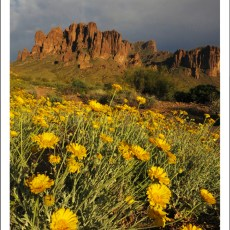 SP Campground Review – Lost Dutchman State Park, Apache Junction, AZ