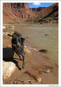 Polly plays by the Colorado at Big Bend BLM