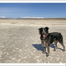 A Place Unlike Any Other (Oh, And Gnats) – Antelope Island State Park, UT