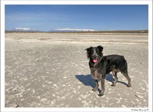 Polly poses in the big salty flats