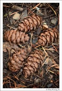 And pine...wonderful pine!