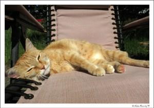 Taggart enjoys a sunning