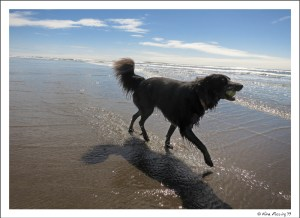 Polly plays at Cape Disappointment