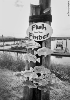 The handy fish-finder in town