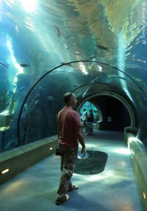 Paul walks the undersea tunnel