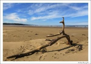 A brilliant day on the coast