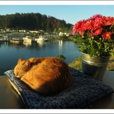Harbor Campground Review – Winchester Bay Marina, OR