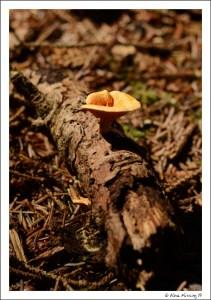 Life grows on a fallen log