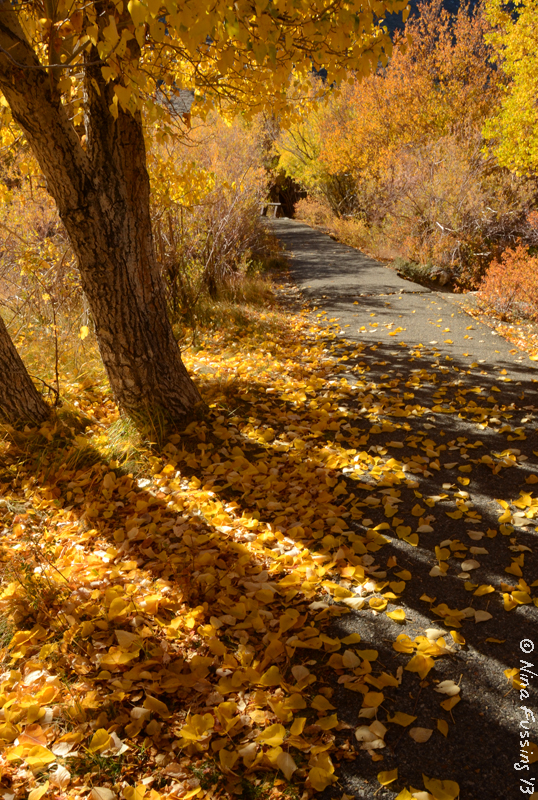 A colorfully-lined path