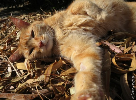 Taggart loves these leaves