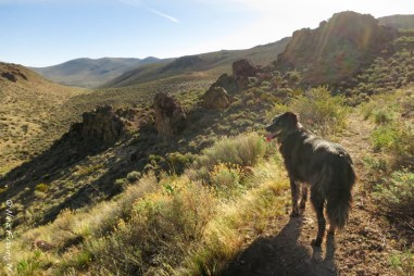 On the trail with doggie