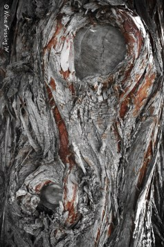 Sculptural bark