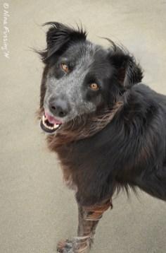 A happy sand-doggie