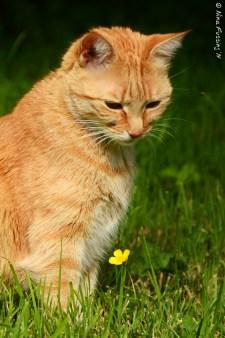 A cat in her element (WA, 2014)