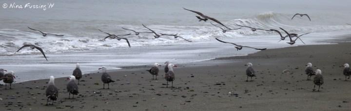Gulls scatter in the morning fog