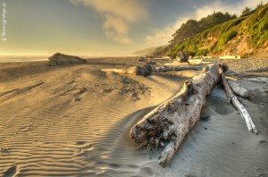The wild coast of Kalaloch Beach