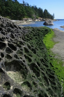 Honeycomb & Algae