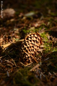 A pine cone reflects the light