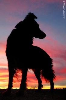 Doggie in silhouette