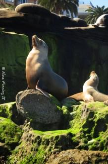 Proud seals on the rocks