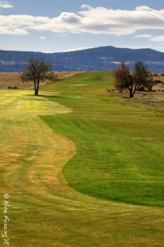 Curves of the course