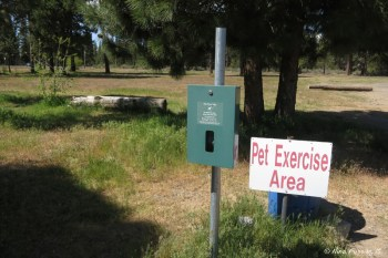 Exercise pet area!