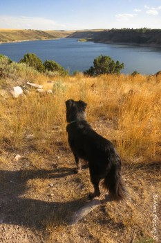 Polly admires the view of the Ririe Reservoir from the campground.