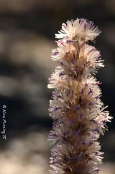Trinidad Lake flowers