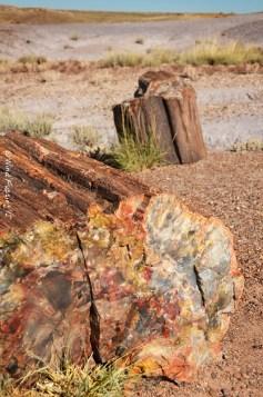 Petrified Wood Up Close