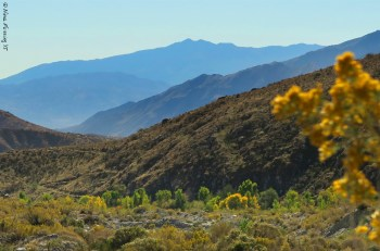 The pristine desert at Whitewater Preserve