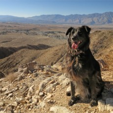 5 Great Dog-Friendly Hikes in Palm Springs/Desert Hot Springs, CA