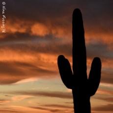 A World Away & A Few Sunsets Later – Benson, AZ