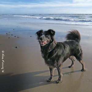 Doggie is happy to be back on the beach!
