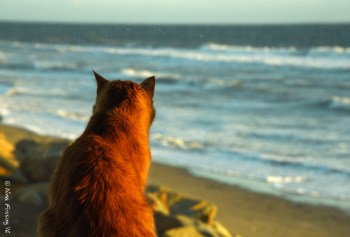 Taggart takes in the ocean view from our site
