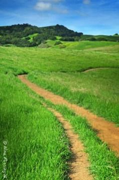 California Spring Green