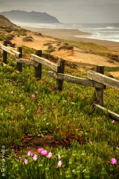 Point Reyes beauty