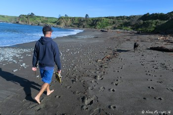 Walking doggie on the off-leash dog-beach just minutes from camp!