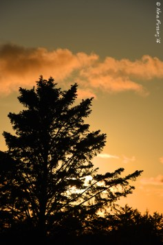 Trees in sunset