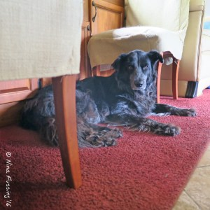 """Polly has been """"place trained"""". This is her spot."""