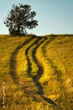 A simple trail