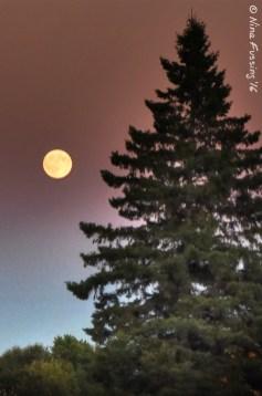 A Soo Moonrise