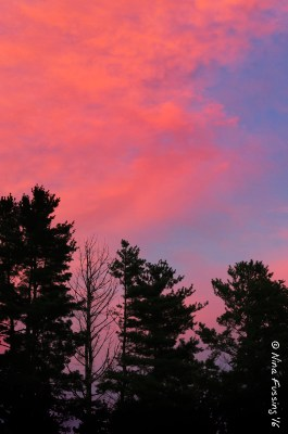 Pink sunset in farm country