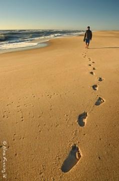 Assateague Footsteps