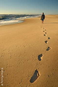 Assateague Footsteps