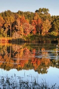 Alafia lakes