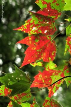Fall inklings