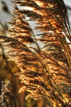 Cape Cod Wind