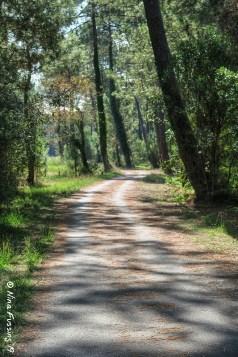 Shaded pathways